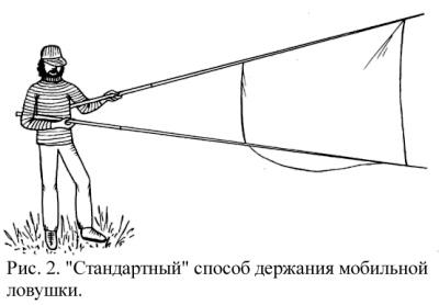 http://zmmu.msu.ru/bats/plecotus/plecpic/fig2.jpg